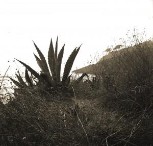 cactus2__RED__